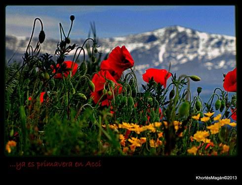 130414 Primavera Hrta & Mariposa & Cerezo xKhortés 019
