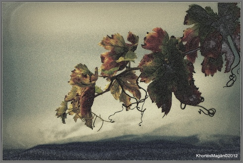 Copia de 121113 Vlle Zlb & GX xKhortés 028-003
